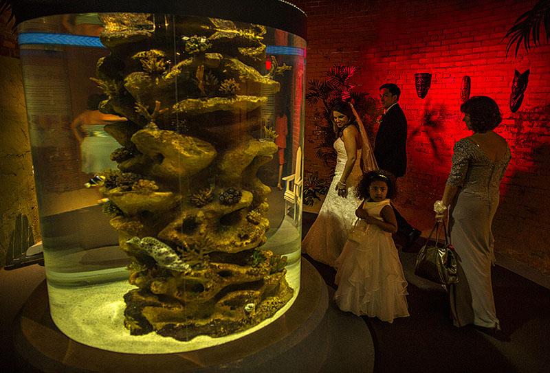 AE-cleveland-aquarium-wedding-01