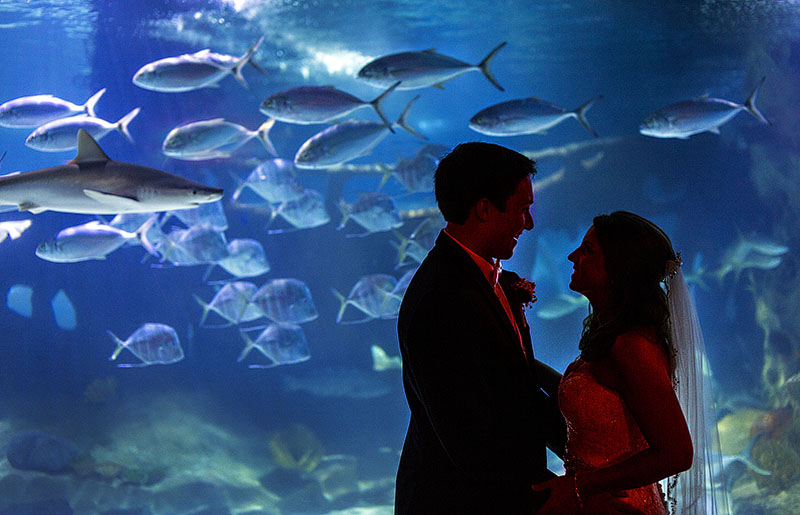 AE-cleveland-aquarium-wedding-02